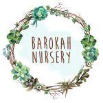 Barokah Nursery