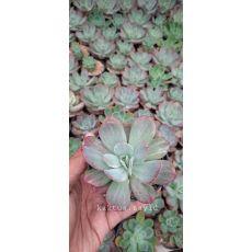 Bunga & Tanaman Artifisial